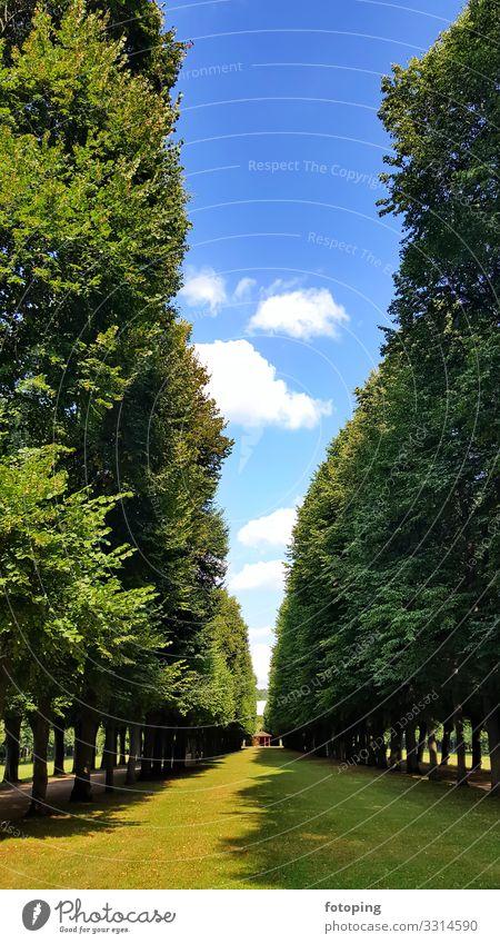 Ansbach schön Tourismus Ausflug Sightseeing Städtereise Sommer Sonne Wolken Wetter Stadt Architektur Sehenswürdigkeit Wahrzeichen Denkmal blau Ausflugsziel