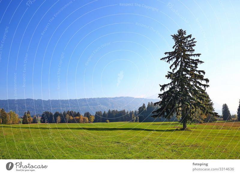Werdensteiner Moos schön Ausflug Sommer Sonne wandern Natur Landschaft Pflanze Wetter Baum Wald Moor Sumpf Sehenswürdigkeit außergewöhnlich Sauberkeit blau