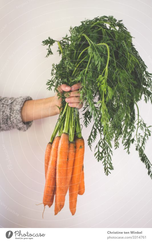 Die Hand einer jungen Frau hält einen Bund Möhren Lebensmittel Gemüse Ernährung Bioprodukte Vegetarische Ernährung Diät Vegane Ernährung Junge Frau Jugendliche