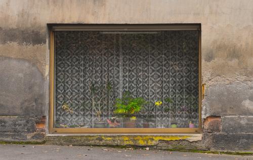 Versteckte Schönheit Freizeit & Hobby Orchideenzucht Pflanzenzucht Dekoration & Verzierung Haus Fassade Fenster gelb grau grün rosa Schaufenster Wand marode