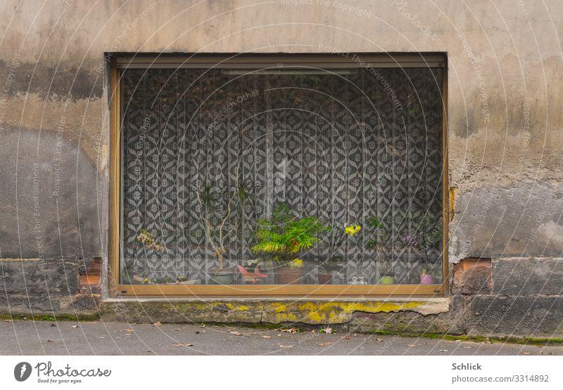 Versteckte Schönheit grün Haus Fenster gelb Fassade grau rosa Freizeit & Hobby Dekoration & Verzierung Neonlicht hässlich