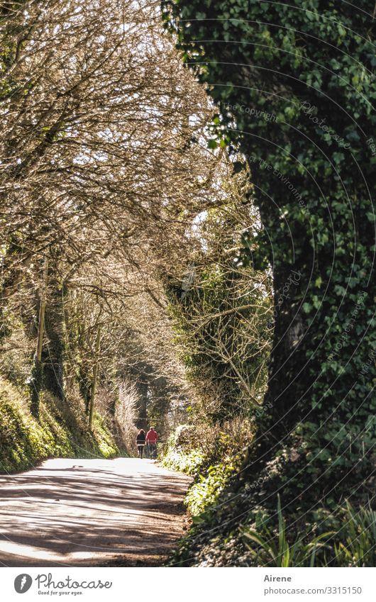 zwei Engländer auf dem Heimweg Straßen Allee Alleebaum Efeu Fußgänger Wanderer weggehen Abschied heimweg Fußweg hell Zentralperspektive entfernen entfernung