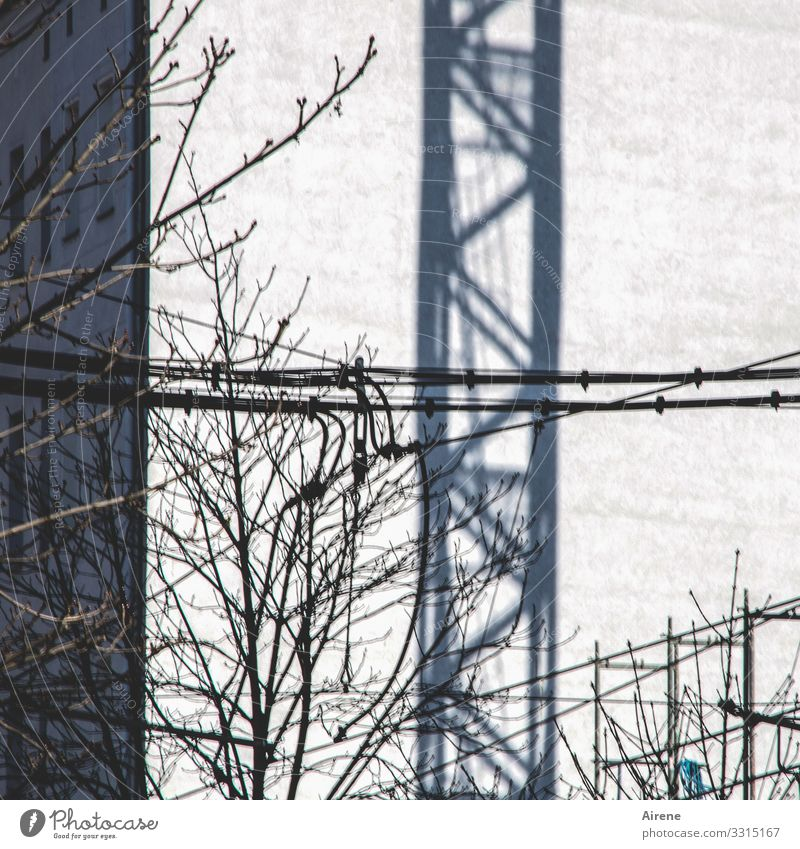 Bauvorhaben Zweige u. Äste Gebäude bauen grau weiß Schatten Kran Baukran Baustelle Kabel Fassade Nachbar Linie Stadt Leitung Strebe Farbfoto Gedeckte Farben