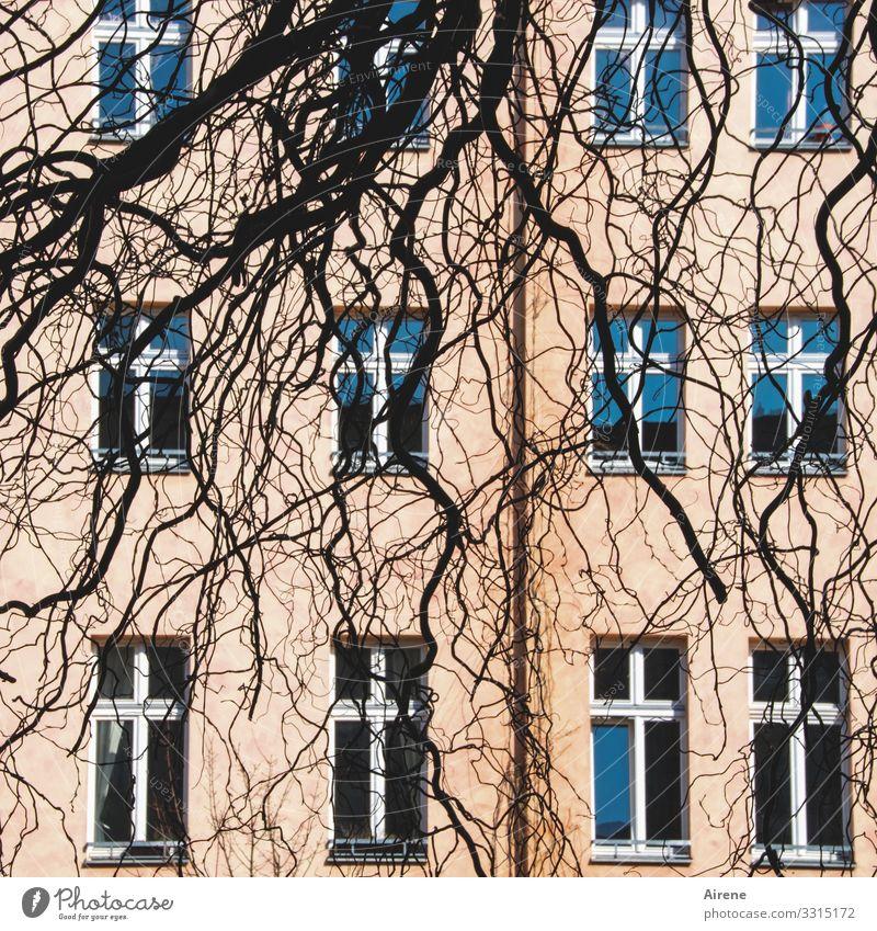 strubbelig Ast Zweig Fassade Fenster hängen Wachstum Berlin rosa blau schwarz Strukturen & Formen Fensterfront Muster unregelmäßig krumm Baum durcheinander