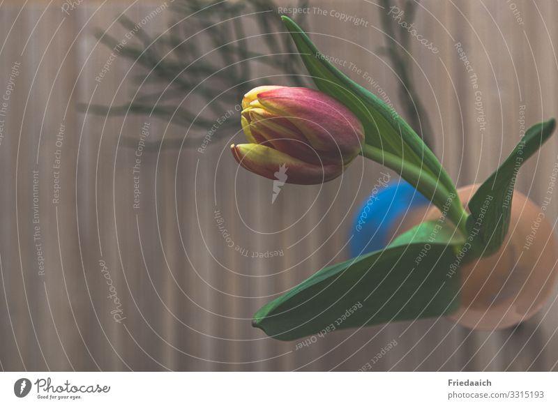 Frühlingstischschmuck Wohnung Dekoration & Verzierung Blume Tulpe Blühend Duft frisch natürlich gelb rot Stimmung Glück Zufriedenheit Frühlingsgefühle Erholung