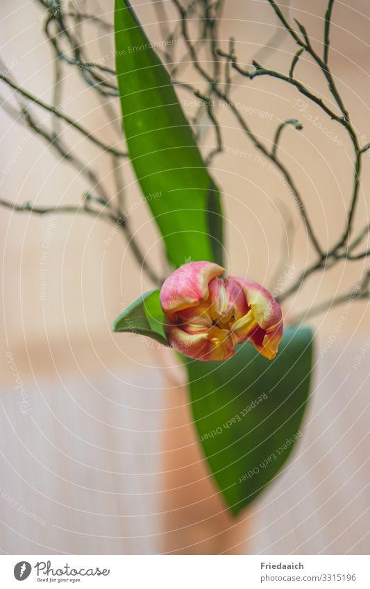 Ein Teil vom Frühling Wohnung Dekoration & Verzierung Blume Tulpe Blumenstrauß Blühend Duft genießen verblüht ästhetisch natürlich gelb grün rot Lebensfreude