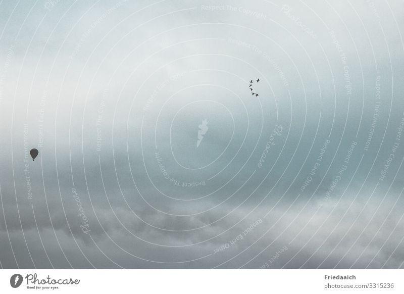In den Himmel fliegen Ferne Freiheit Natur Wolken Winter Wind Vogel Schwarm beobachten entdecken genießen Blick frei Unendlichkeit oben blau grau Stimmung Glück