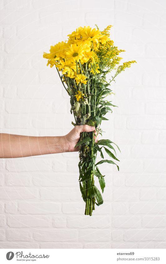 Gelber Blumenstrauß aus Chrysanthemen in Frauenhand vereinzelt gelb Natur weiß Vase Pflanze geblümt grün Haufen Muttertag Valentinstag Beautyfotografie Blüte