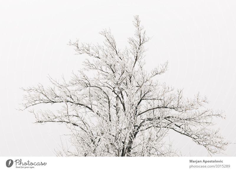 Spitze der schneebedeckten Bäume Umwelt Natur Pflanze Winter Klima Wetter Nebel Eis Frost Schnee Baum kalt Stimmung Gelassenheit Einsamkeit Monochrom 1 Leben