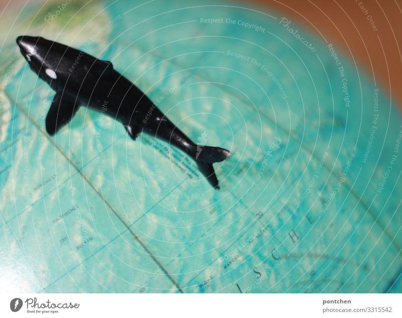 Meeresbewohner blau Wasser schwarz Tourismus Angst leuchten gefährlich Fisch Umweltschutz Globus Umweltverschmutzung Überleben Haifisch Tierschutz