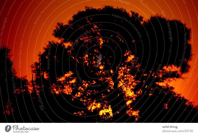 boom Afrika ondergaande zon Sonne son tree