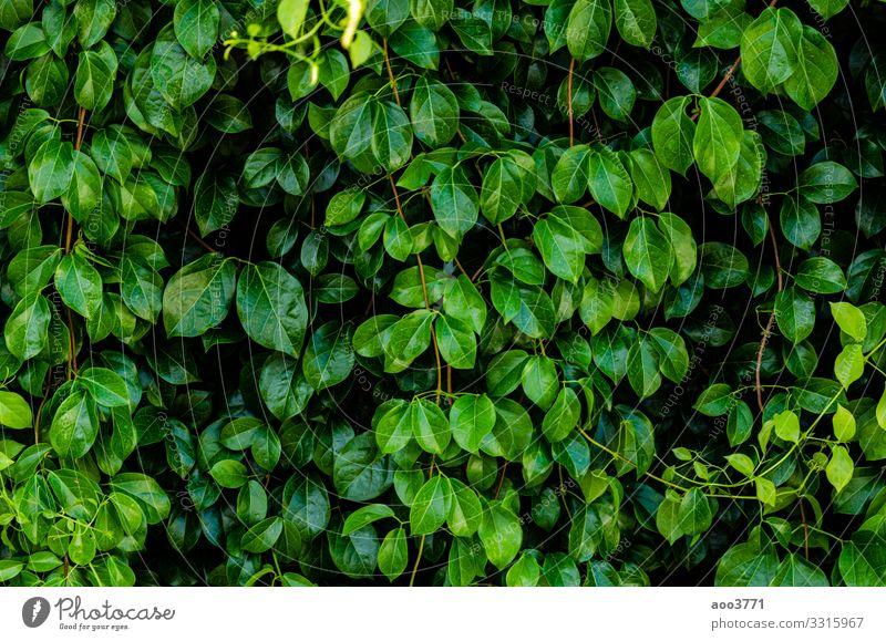 Grüner Blatthintergrund Design schön Sommer Garten Tapete Umwelt Natur Pflanze Baum Wald Urwald Wachstum dunkel frisch hell klein natürlich Sauberkeit grün