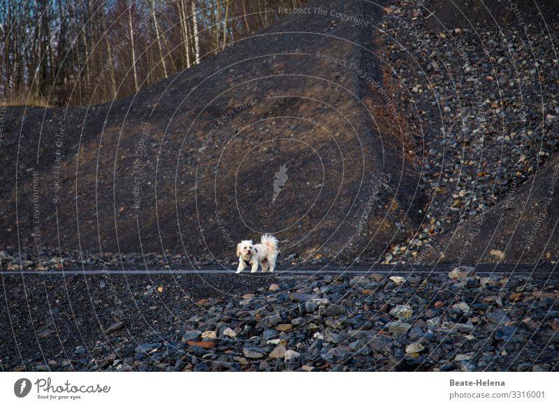 Hundeleben: spannender Ausflug Natur Landschaft Erholung Tier Berge u. Gebirge Gesundheit Lifestyle Wege & Pfade Bewegung Glück wandern springen Kommunizieren
