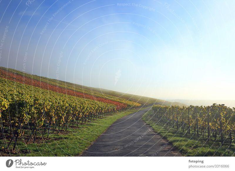 Nebel im Weinberg schön Tourismus Ausflug Sonne wandern Landwirtschaft Forstwirtschaft Natur Landschaft Pflanze Wolken Herbst Wetter Baum Sehenswürdigkeit blau