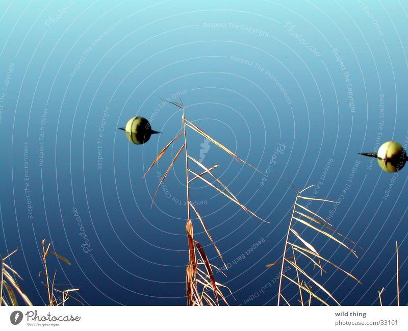 schwim wasser Wasser scwimmen line zwemlijn balle