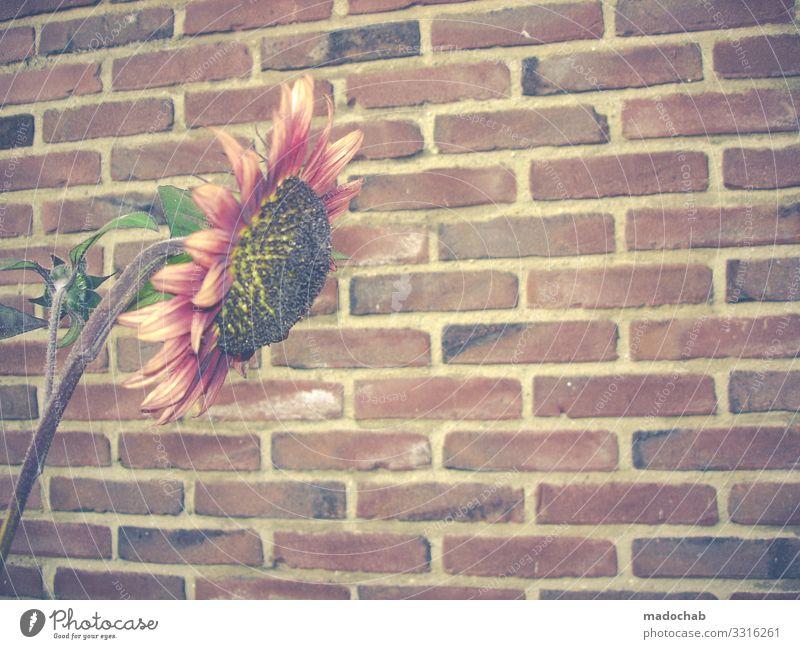 Urban gardening Pflanze Stadt Blume Einsamkeit Wand Traurigkeit Mauer Stein Wachstum Romantik Blühend Hoffnung Trauer Mut Backstein Müdigkeit