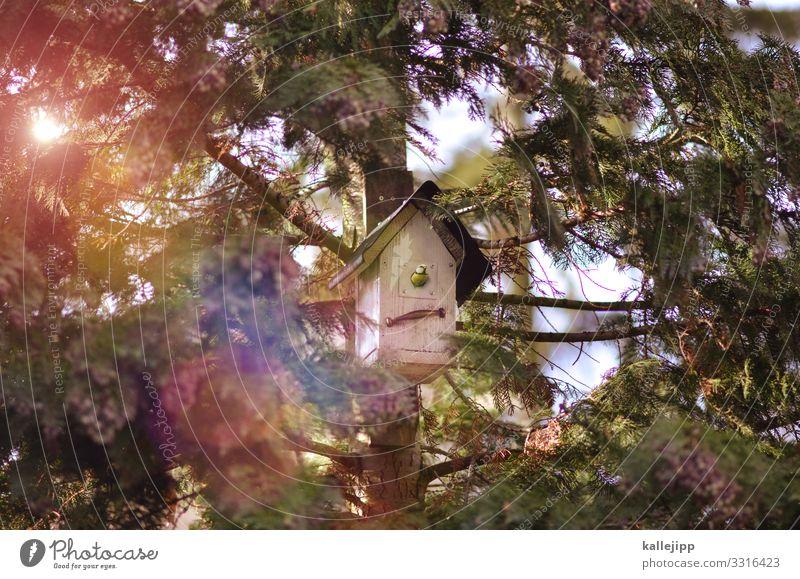 einfamilienhaus Umwelt Natur Landschaft Pflanze Tier Baum Wald Haus Einfamilienhaus Traumhaus Hütte Wildtier Vogel Flügel 1 sitzen Meisen Futterhäuschen
