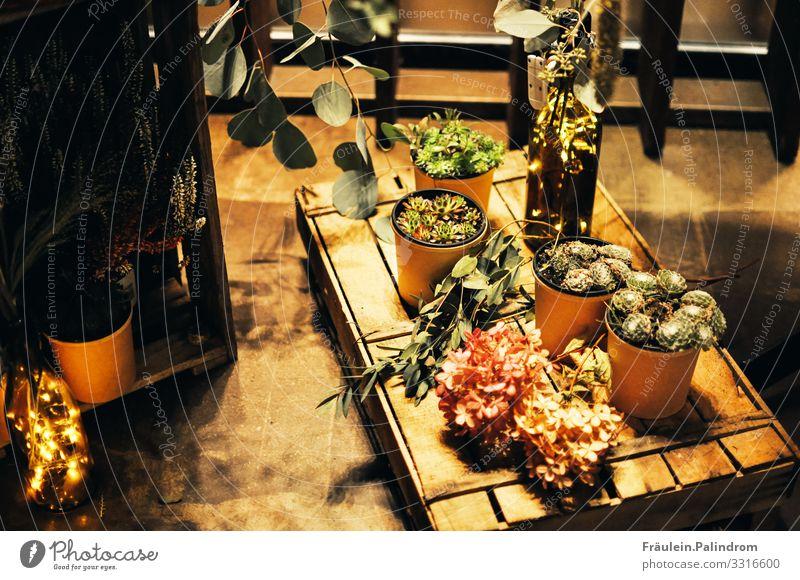Licht und Pflanzen Blume Sträucher Moos Grünpflanze Topfpflanze exotisch Garten Blühend leuchten trendy schön Stadt Idylle Sukkulenten Kaktus