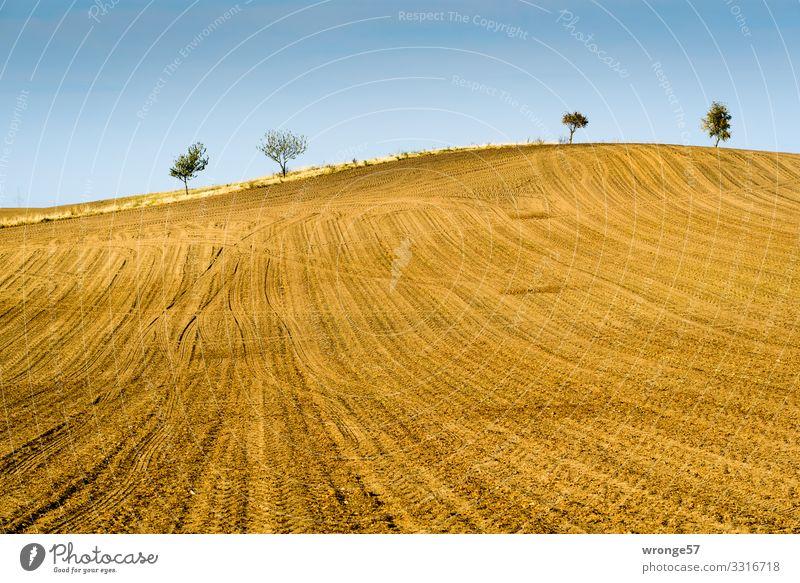 Bördeacker   Traktorspuren auf einem abgeernteten hügeligen Feld in der Börde Acker Magdeburger Börde Hügel Hügelige Landschaft hügeliges Feld Außenaufnahme