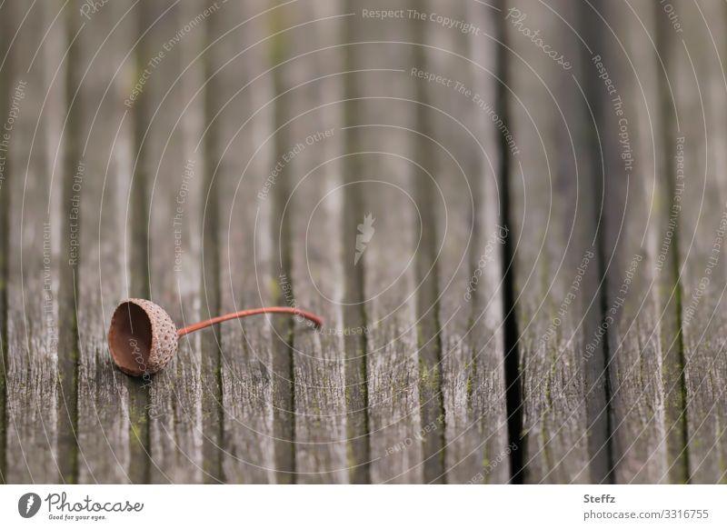 ein Hütchen Umwelt Natur Herbst Eicheln Deutschland Fußweg Holzweg Boden Holzfußboden Bodenbelag Steg einfach klein natürlich braun achtsam Einsamkeit