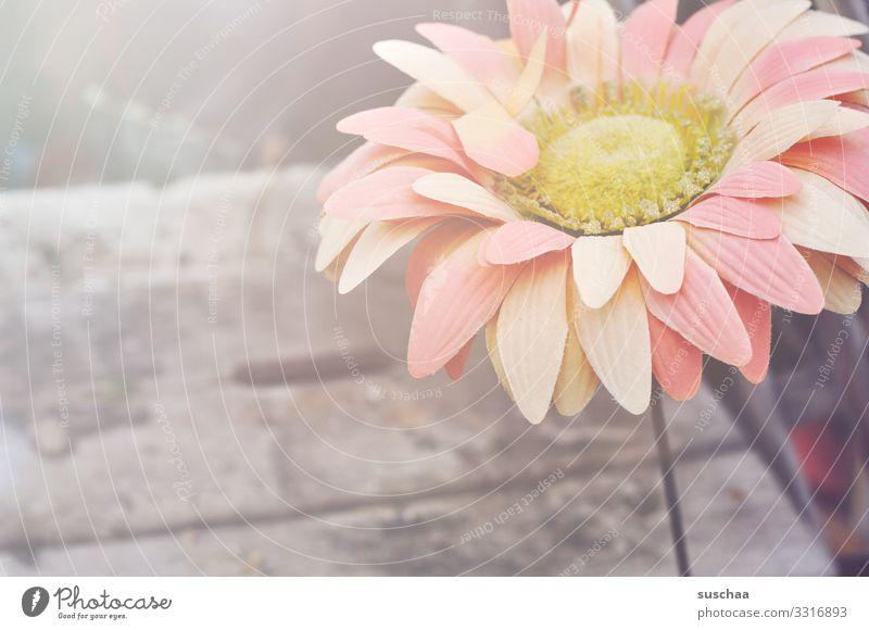 plastikblume Blume Plastik Kunststoff Plastikblume Nachbildung künstlich Natur falsch Traurigkeit trist Blütenblatt trashig dreckig trocken herb Einsamkeit