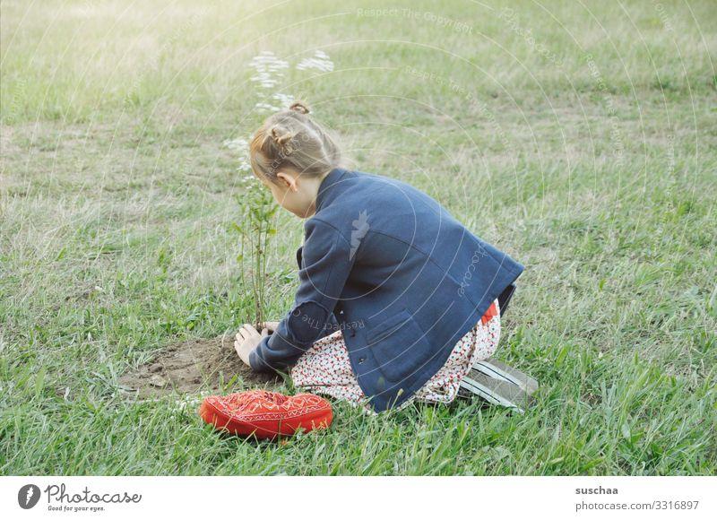 mädchen pflanzt einen blumenbaum mitten auf einer wiese Kind Mädchen Gras Wiese Blume Wiesenblume pflanzen eingraben Gartenarbeit Natur Sommer Pflanze Frühling