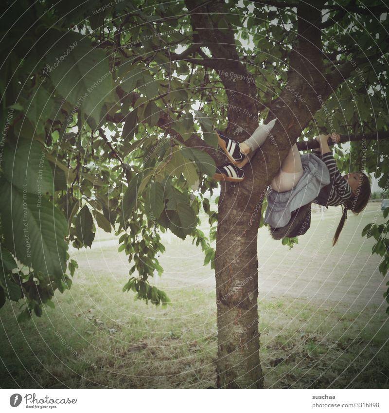 rauf auf den kirschbaum .. Kind Mädchen Kindheit Sommer Außenaufnahme Natur Garten Wiese Kirschbaum Klettern Kirschen pflücken Haare & Frisuren Zopf Baumstamm