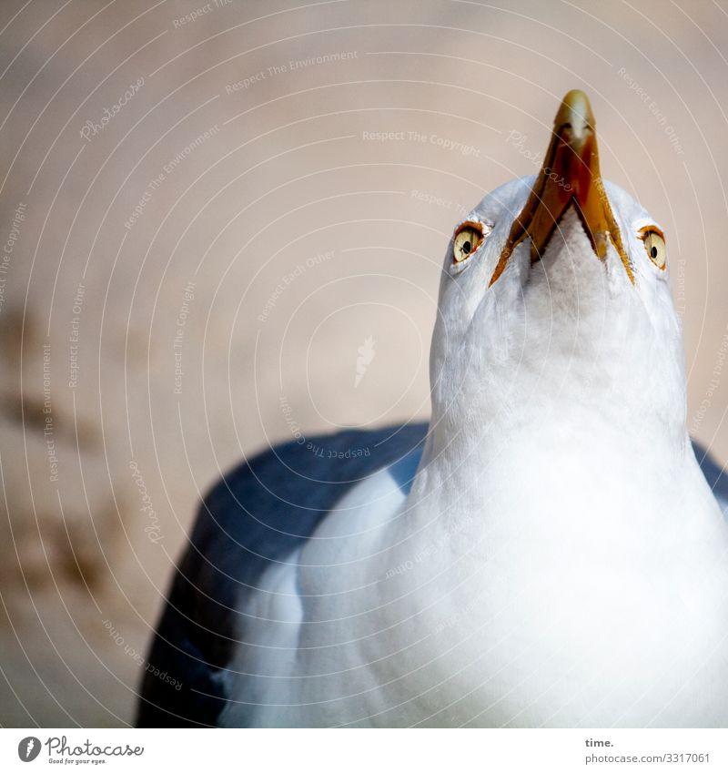 Halswirbelsäulentraining (29) Tier Vogel Sand Feder Perspektive Schönes Wetter warten beobachten Neugier entdecken Leidenschaft Konzentration Wachsamkeit