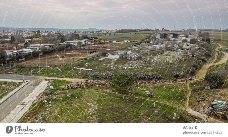 Ziegenherde zieht durch Landschaft in Guillena Spanien Landwirtschaft Forstwirtschaft Schäfer Umwelt Natur Pflanze Tier Wiese Feld Europa Stadtrand Hütte