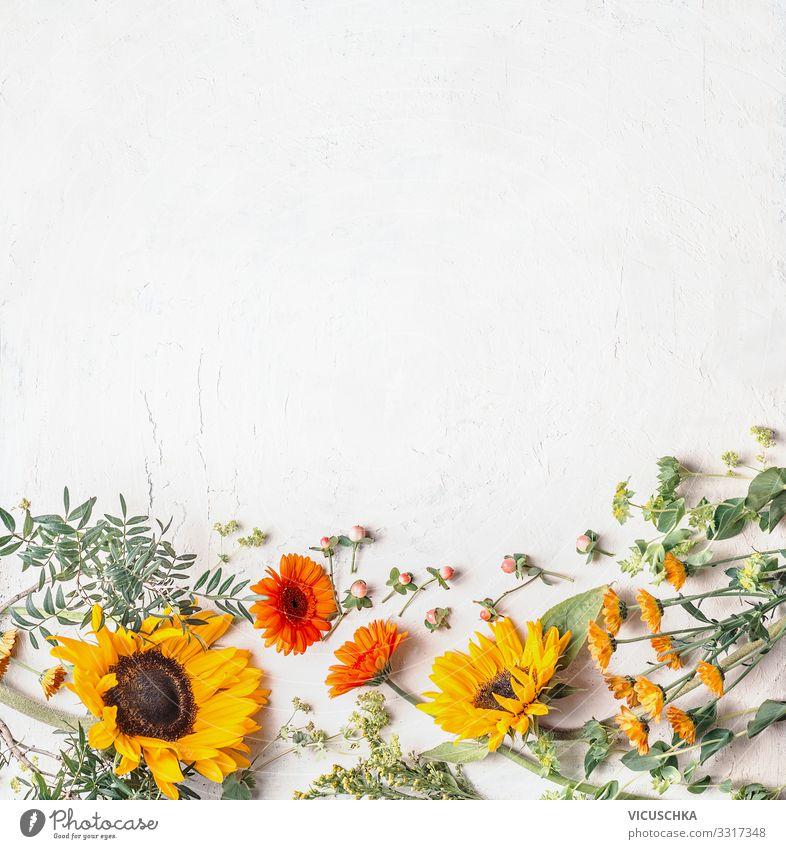 Einfassung von schönen Sommergartenblumen mit hübschen Sonnenblumen auf weißem Hintergrund, Draufsicht Borte lieblich Garten Inspiration Textfreiraum Kamille