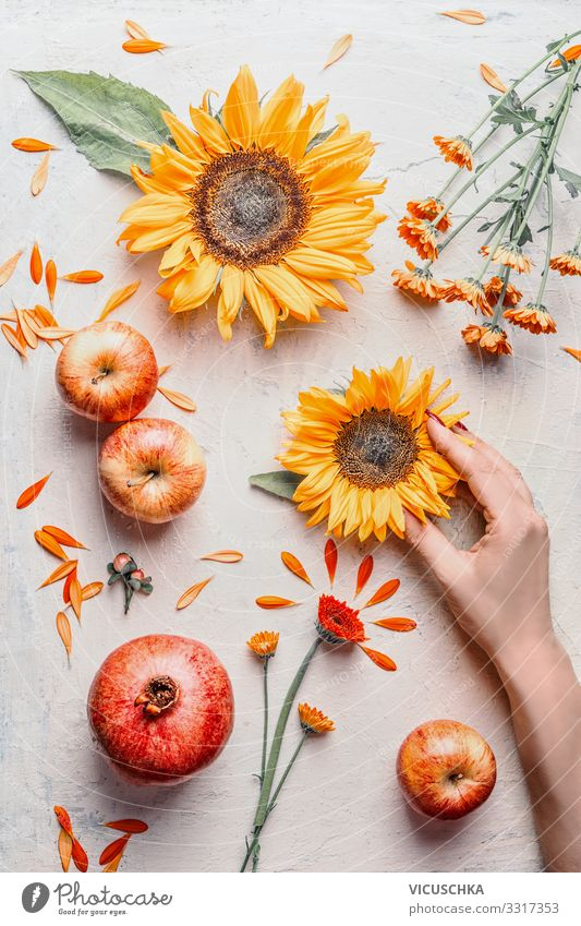 Weibliche Hand hält Sonnenblumen mit Sommerblumen und Äpfeln auf hellem Hintergrund, Ansicht von oben. Sommer-Konzept Frau Beteiligung Licht Draufsicht