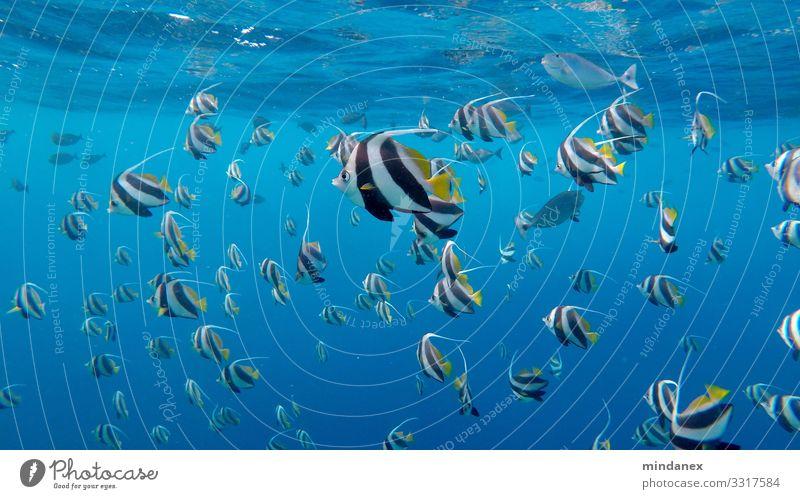 Fischsuppe Tier Urelemente Wasser Sommer Schönes Wetter Küste Strand Riff Korallenriff Wildtier Tiergruppe Herde Rudel Ferien & Urlaub & Reisen