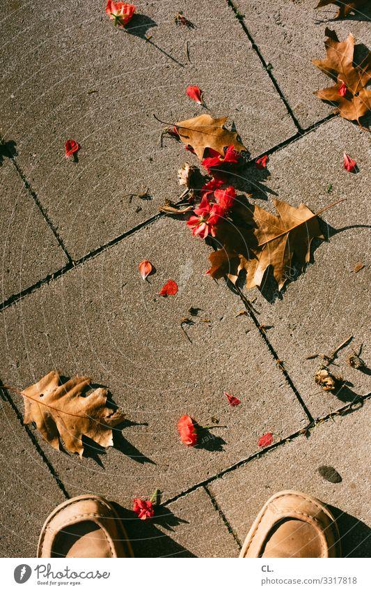 blätter und blumen Mensch 1 Herbst Schönes Wetter Blume Blatt Schuhe Boden stehen ästhetisch braun rot Vergänglichkeit Fotografieren Farbfoto Außenaufnahme Tag