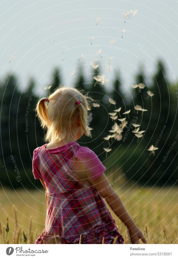 Fliegt!!!!! Mensch feminin Kind Mädchen Kindheit Kopf Haare & Frisuren 1 3-8 Jahre Umwelt Natur Landschaft Pflanze Sommer Schönes Wetter Baum Gras Wiese Feld