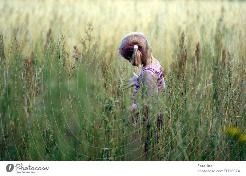 Naturforscherin ;-) Mensch feminin Kind Mädchen Kindheit Haare & Frisuren 1 Umwelt Landschaft Pflanze Sommer Gras Wiese hell natürlich grün Zopf forschen