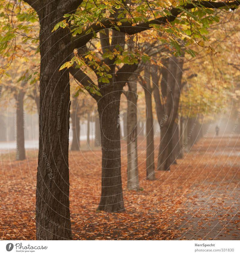 """""""in den Alleen hin und her unruhig wandern..."""" Natur Landschaft Herbst Nebel Baum Blatt Wald Wien Österreich Stadt Park Sehenswürdigkeit ästhetisch braun gelb"""