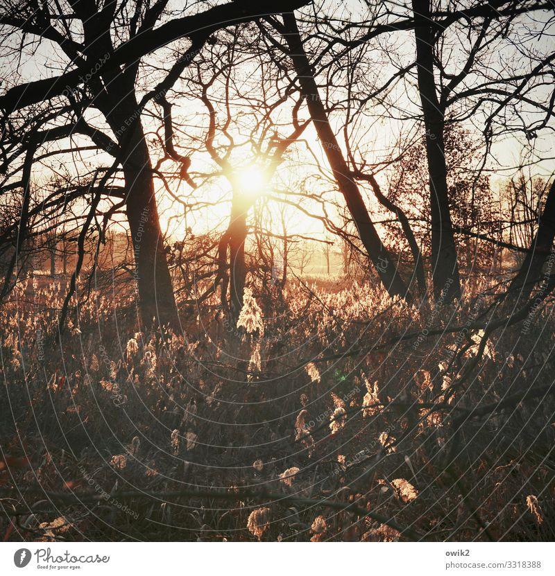 Äste und Lichter Umwelt Natur Landschaft Pflanze Luft Wolkenloser Himmel Horizont Sonne Schönes Wetter Baum Sträucher Wildpflanze Röhricht Ast Zweig leuchten