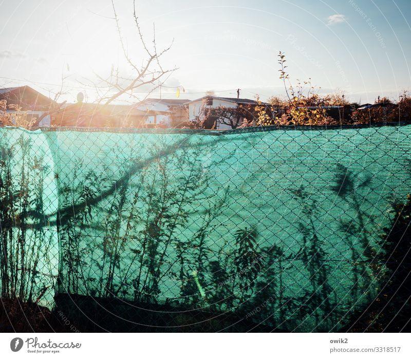 Hinterm Zaune Wolkenloser Himmel Sonne Schönes Wetter Pflanze Baum Sträucher Zweige u. Äste Garten Barriere Begrenzung Grundstücksgrenze Schrebergarten Kolonie