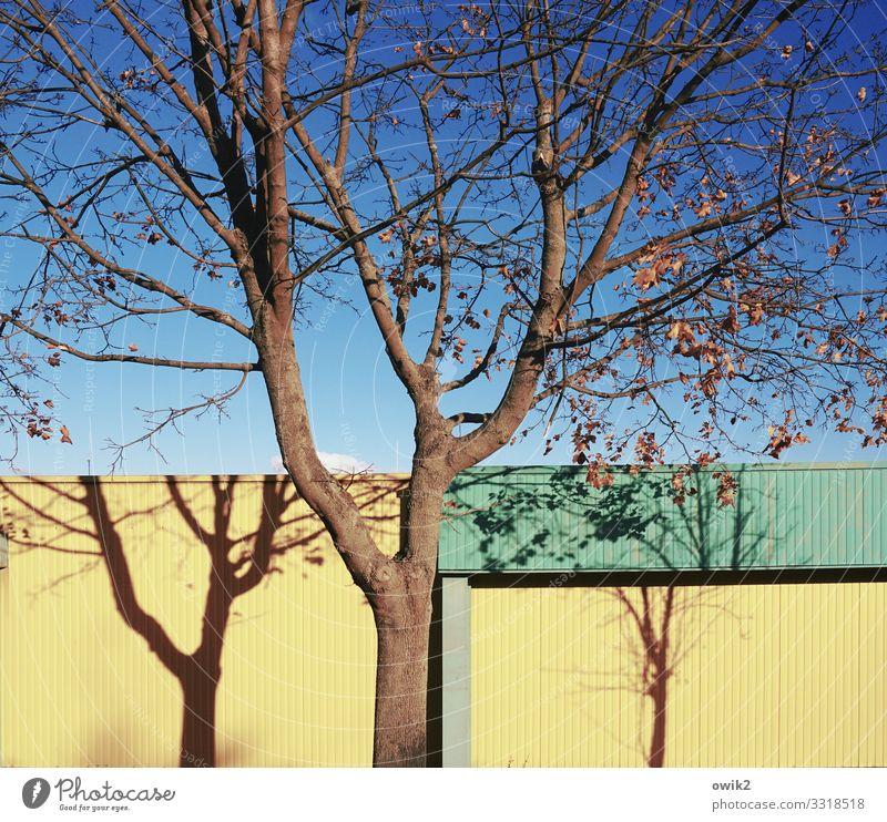 Schattenboxen Umwelt Natur Landschaft Wolkenloser Himmel Herbst Schönes Wetter Baum Ast Zweige u. Äste Baumschatten Fassade Baumarkt Blech Wand Supermarkt