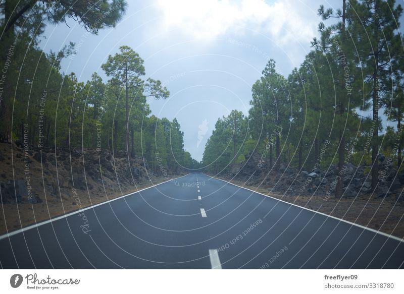 Leere Straße mitten im Wald Ferien & Urlaub & Reisen Tourismus Ausflug Abenteuer Ferne Freiheit Sightseeing Berge u. Gebirge Natur Landschaft Himmel Wolken