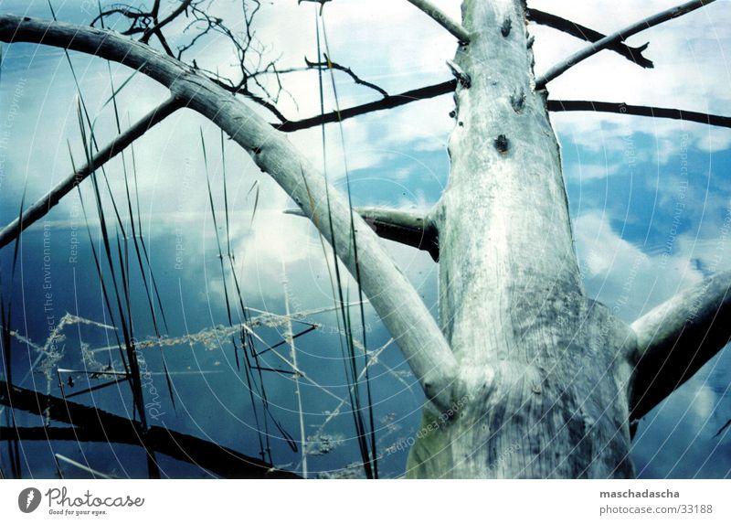 Spiegelung im Wasser Wasserspiegelung Baumstamm Wolken See Reflexion & Spiegelung Schilfgras Küste Ast Himmel toter Baum