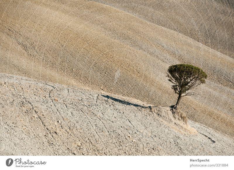 Standortnachteil Natur Baum Einsamkeit Landschaft Wärme Herbst grau braun Feld Schönes Wetter leer Neigung trocken heiß Ackerbau Furche
