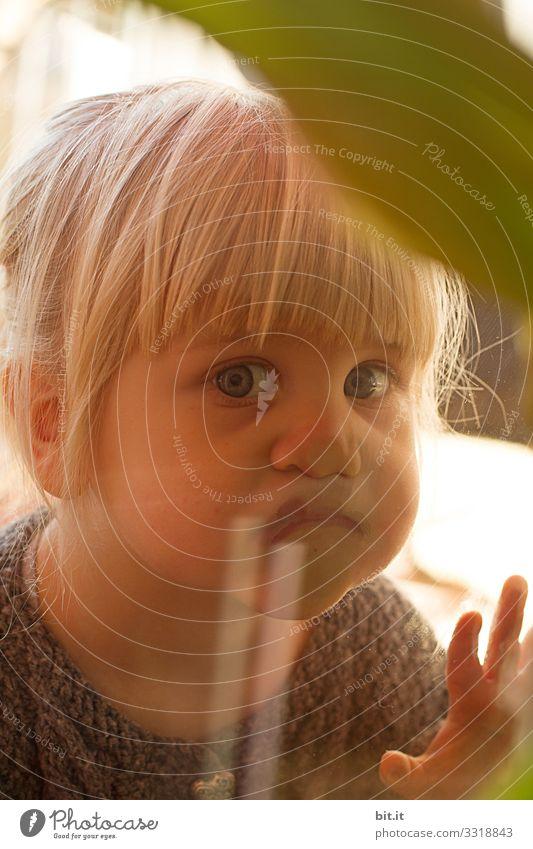 Kleines, goldiges, süßes, niedlichen, blondes, blauäugiges Mädchen mit Ponyfrisur schaut neugierig durch die Scheibe aus Glas vom Fenster und beobachtet, interessiert die andere Seite drinnen, dabei drückt das Kind die Nase platt.