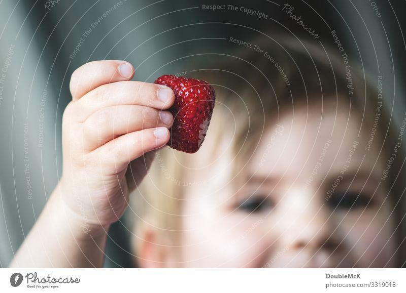 Ein Kind hält eine Erdbeere stolz in der Hand Lebensmittel Frucht Erdbeeren Mensch Mädchen Junge Finger 1 1-3 Jahre Kleinkind berühren festhalten Fröhlichkeit