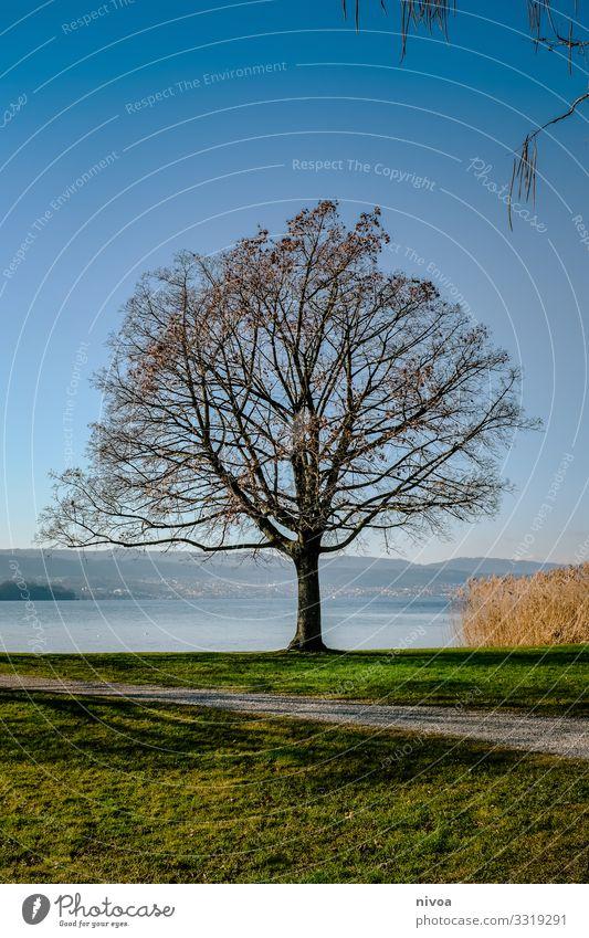 Baum am Zürichsee Frucht harmonisch Wohlgefühl Zufriedenheit Sinnesorgane Ferien & Urlaub & Reisen Ausflug Freiheit Winter Umwelt Natur Landschaft Himmel Wetter
