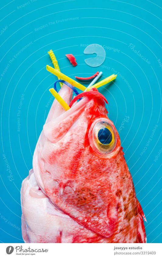 Natur rot Meer Tier Gesundheit Lebensmittel Umwelt frisch Zukunft Fisch Kunststoff Müll Entwurf sparen Umweltverschmutzung