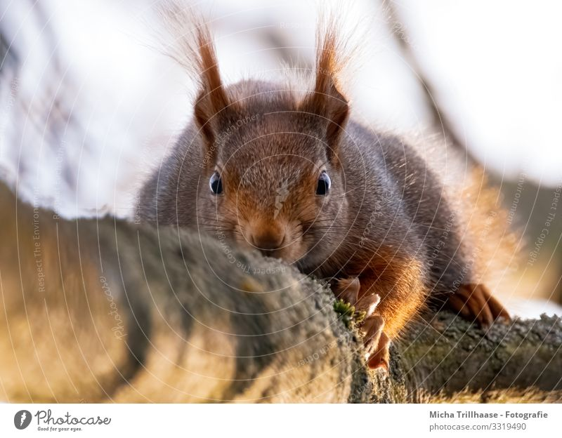 Vom Eichhörnchen beobachtet Himmel Natur grün Blume Tier schwarz gelb Auge lustig orange braun Kopf Wildtier Schönes Wetter beobachten Neugier