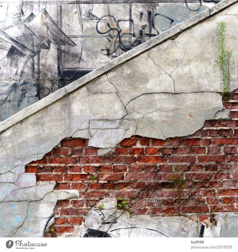 Haut der Stadt - abgeplatzter Betonputz von einer Backsteinfassade mit Graffiti und spiessenden Grünpfanzen Moos Efeu Blüte Grünpflanze Gebäude Bunker verfallen