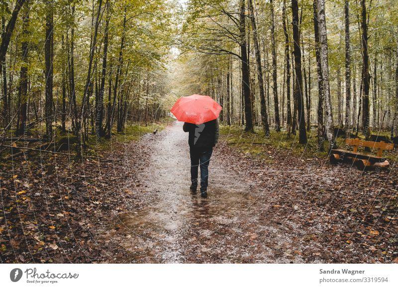 I'm singin' in the rain maskulin 1 Mensch Umwelt Natur Landschaft Herbst schlechtes Wetter Regen Baum Wald Menschenleer Wege & Pfade Jeanshose Regenschirm gehen