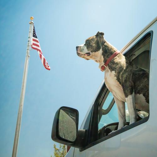 Born in the USA Lifestyle Stil Freude Tier Haustier Hund 1 Partnerschaft Farbfoto Außenaufnahme Licht Tierporträt